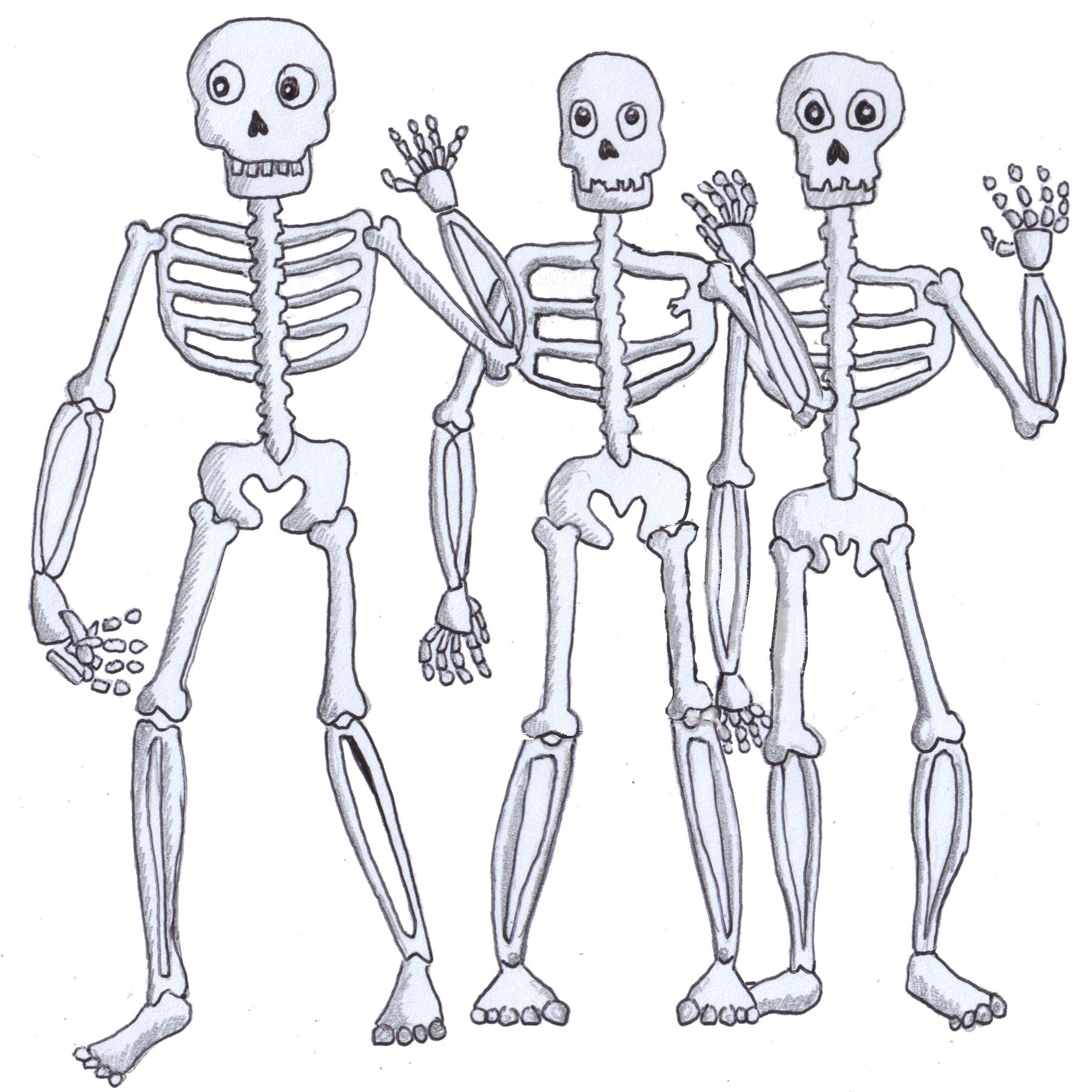 3 skeletons with legs